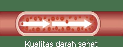 darah sehat